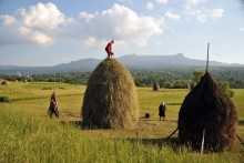 26july-romania-hay-making-breb