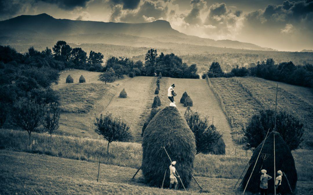 Making hay – before it rains in Maramures