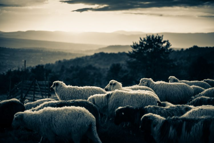 sheep-station-3